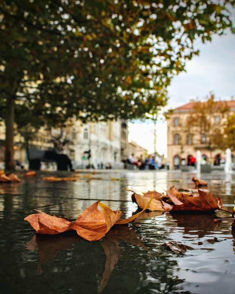 13 fotografii de octombrie frunze
