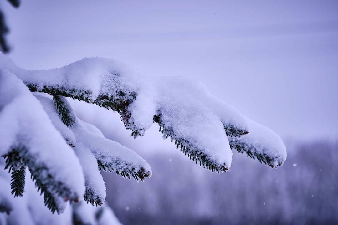 dragossophotography ninsoare cluj