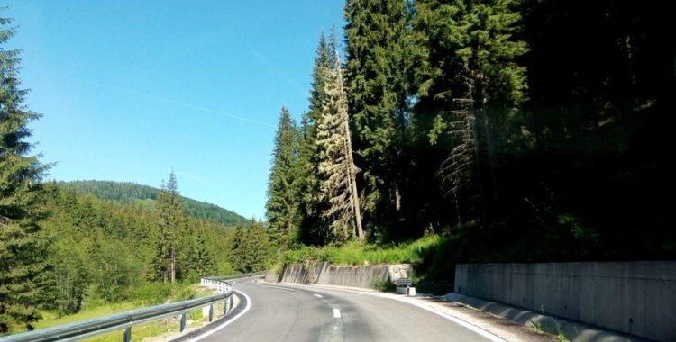 Perdele forestiere în Cluj
