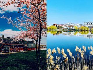 Agenda săptămânii în Cluj: evenimente 30 martie-5 aprilie #StămAcasă