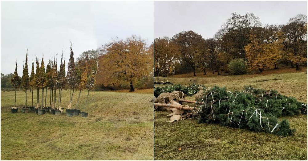 Pădurea-Parc Hoia prinde rădăcini: a început revitalizarea și extinderea Parcului Etnografic