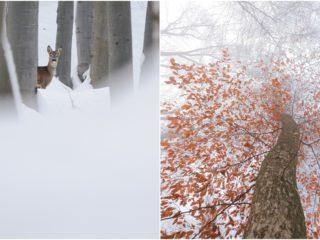 Făget și Hoia: animale și peisaje surprinse de un fotograf clujean
