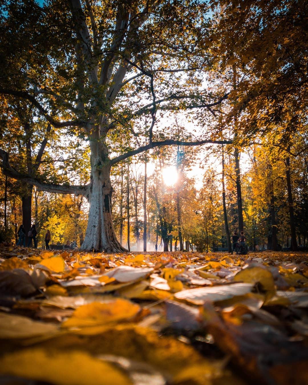 gebealpar copacul din parc