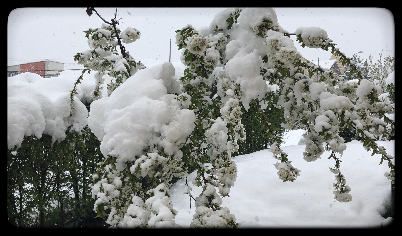 iarnă în aprilie cluj (2)