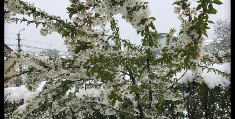 ninsorile din aprilie