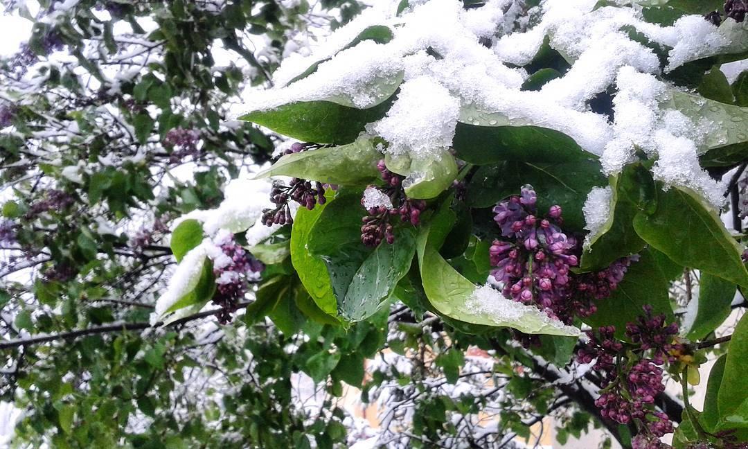iarnă în aprilie cluj 4