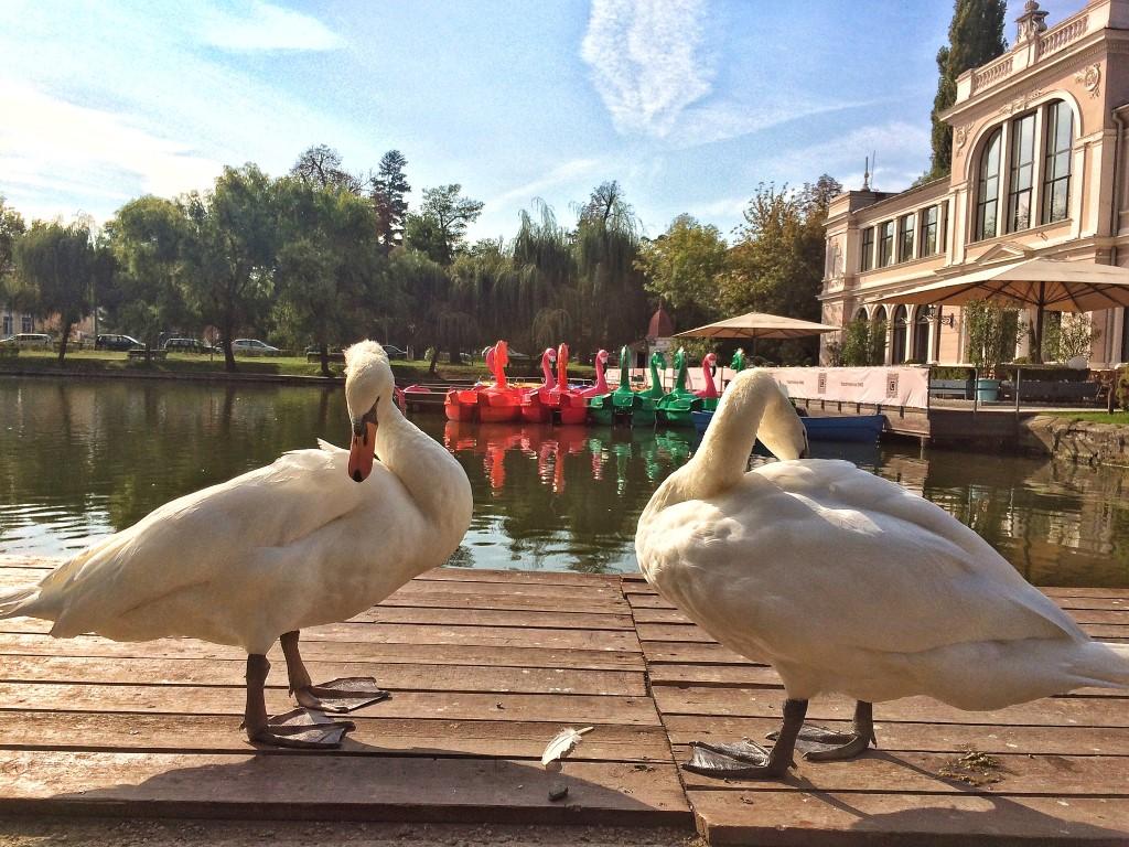 Locuri romantice în Cluj