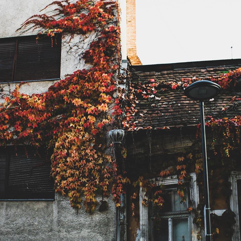 Clujul in 13 fotografii ale lunii octombrie 2019
