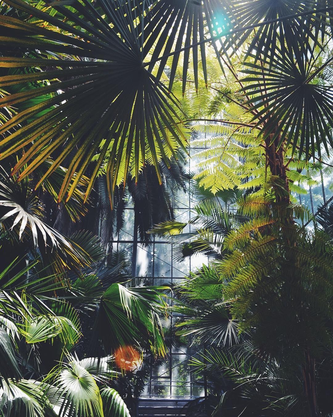 palmieri gradina botanica cj