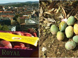 Oameni și mango… sau cum ajunge Regele Fructelor la Cluj | Mango People