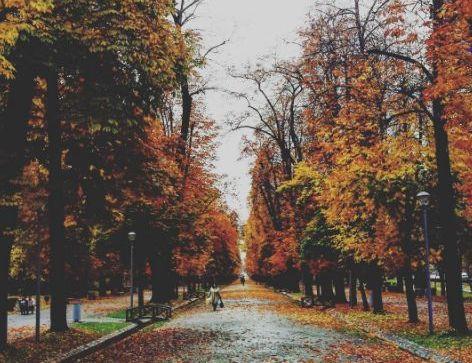 Ce poți face în Cluj-Napoca în perioada 1 – 6 noiembrie?