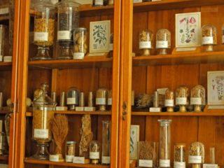 muzeul-botanic-ubb-cluj-5