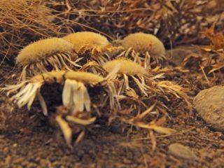 muzeul-botanic-ubb-cluj-2