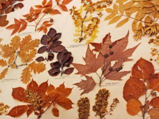 muzeul-botanic-ubb-cluj-1