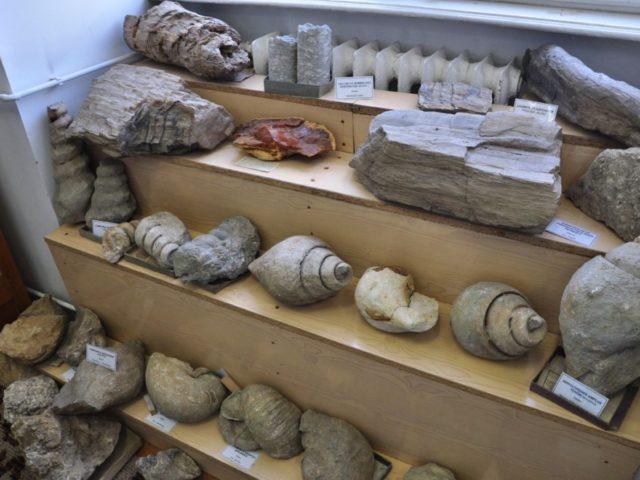 muzeul de paleontologie si stratigrafie UBB Cluj