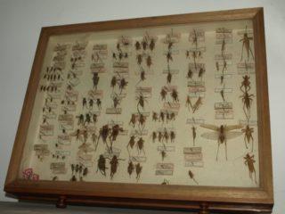 Muzeul Zoologic UBB-2