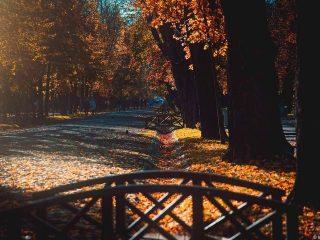 Program de weekend în Cluj: activități 20-22 noiembrie 2020
