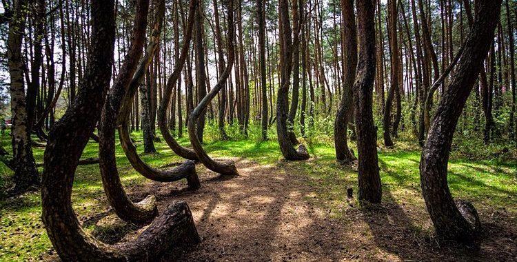 Sedusă cu pluta în Pădurea Hoia