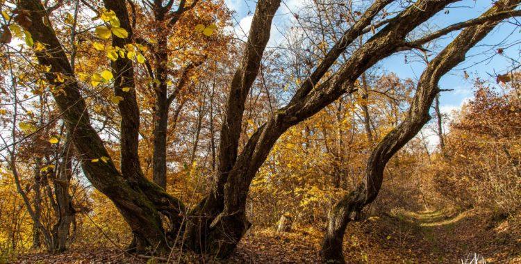 parte din Pădurea Hoia-Baciu ok
