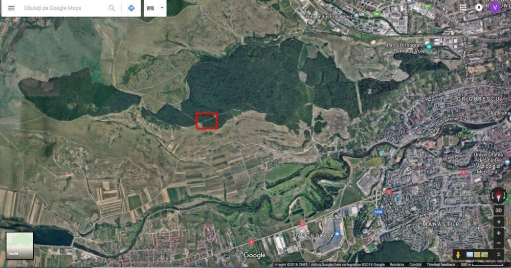 parte din Pădurea Hoia-Baciu