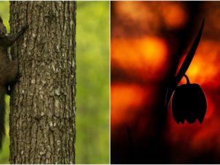 FOTO: Hoia, Făget și Cheile Turzii – vietăți și plante în fotografii de primăvară