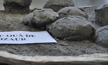 Découvrez Cluj : le seul nid d'œufs de dinosaure de Roumanie, trouvé et conservé dans la position initiale