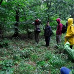 Forêt d'Hoia-Baciu