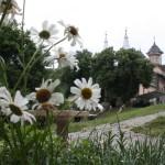 Monastère de Nicula
