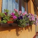 La Pension Mora Cluj