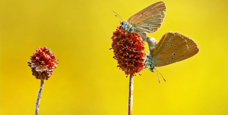 tinutul fluturelui albastru (3)