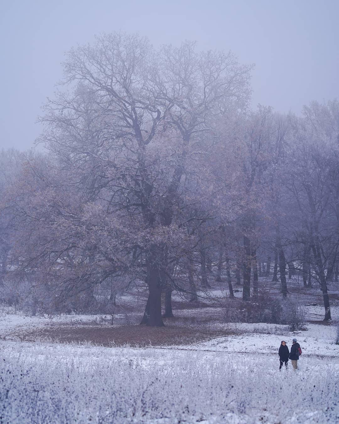 vermllllon oameni si copaci ninsoare
