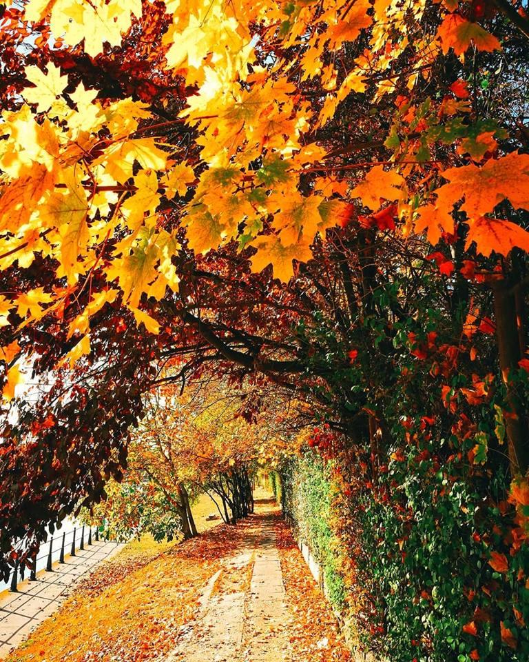toamna in 13 fotografii de octombrie