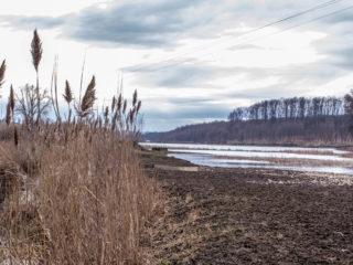 Lacul Cicoș din Săcueni 22