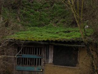 Satul celor 1000 de pivnițe 10