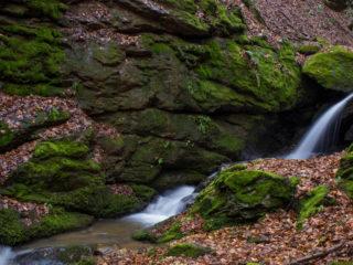Pădurea Neagră, județul Bihor