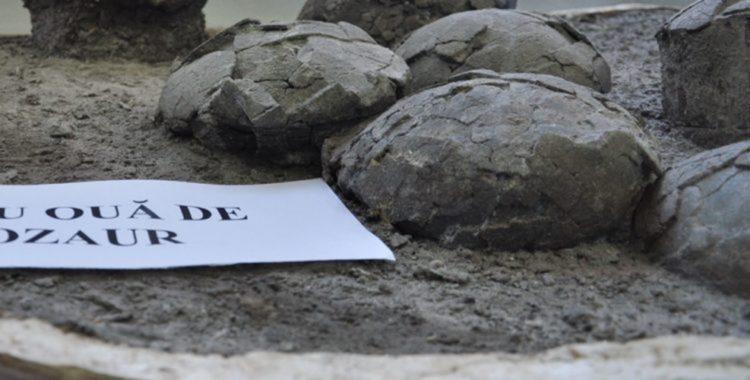Cuibul cu ouă de dinozaur păstrat în poziția inițială, din Cluj - Oradea