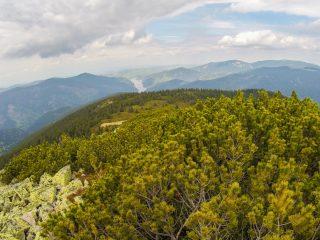 Vârful Buteasa – Grădina botanică din vârf de munte