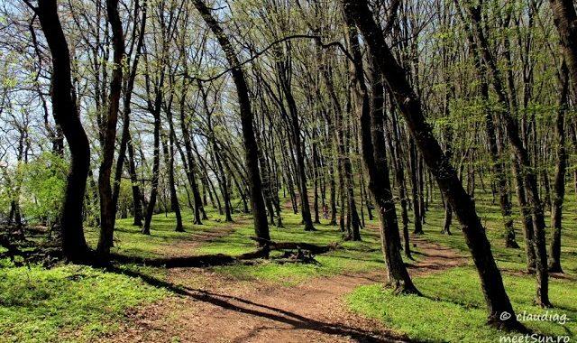 Dealul Lempeș
