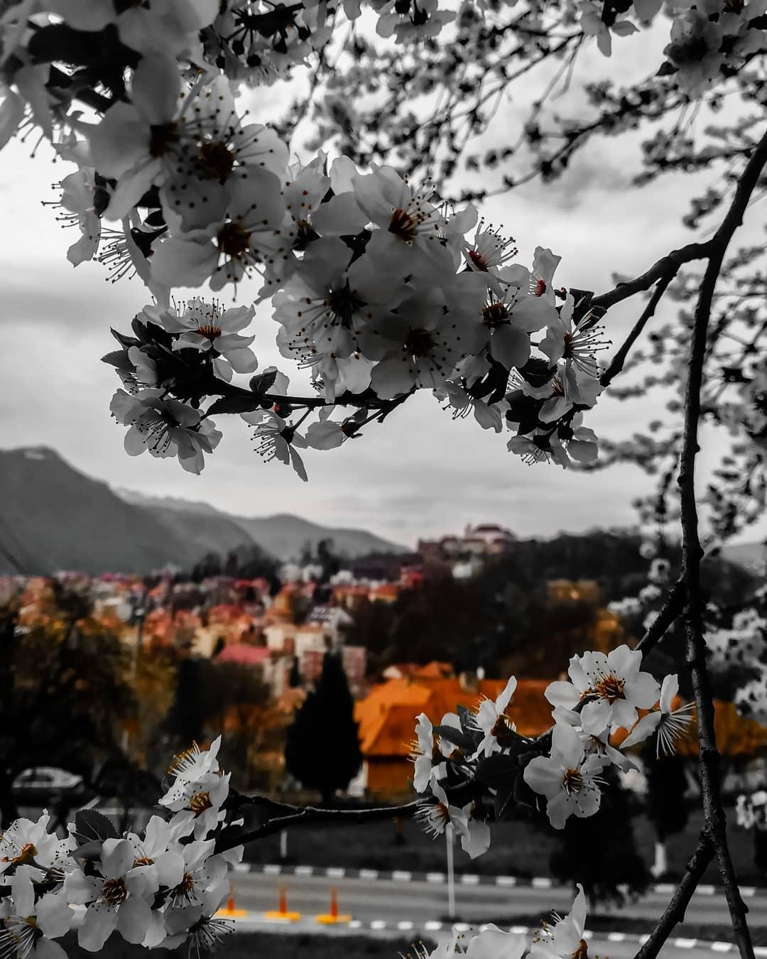 Paștele în Brașov