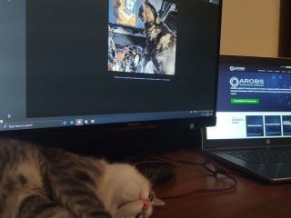 Autoizolarea și pisicile de pe Internet