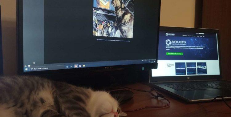 pisicile de pe internet