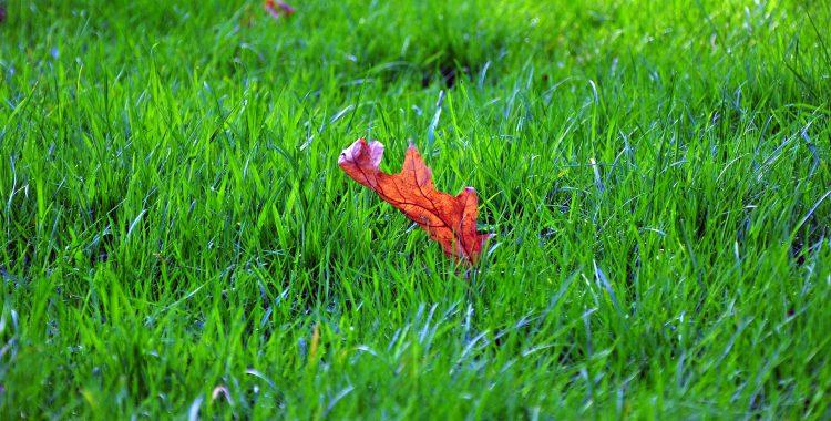 aspirator frunze