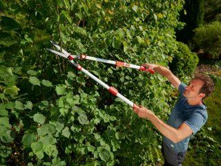 Care sunt instrumentele necesare pentru a tunde pomii și gazonul din curte?