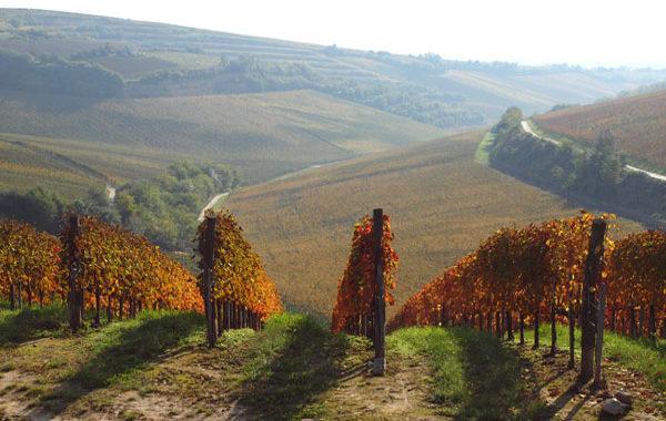 expozitia de vinuri prestige wines of hungary
