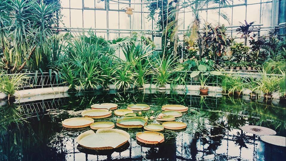 afla ce beneficii ai la gradina botanica muzeele ubb cluj