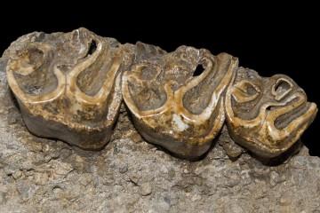 Muzeul de Paleontologie si Stratigrafie UBB