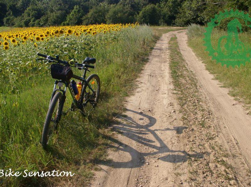 Cu bicicleta la plimbare 1